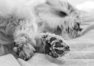 Dog sleeping with paw towards the camera- small business use it or lose it