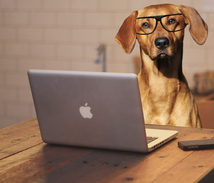 dog with laptop wearing glasses